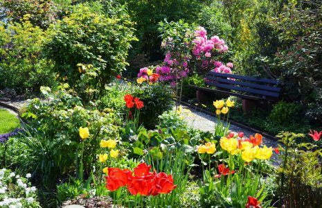 beautiful garden with tulips
